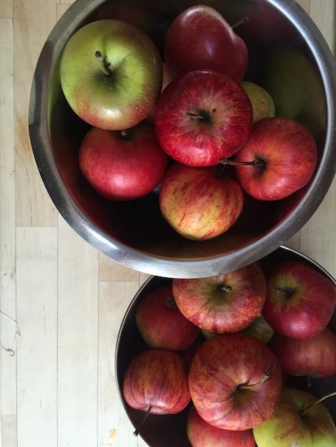 AppleHarvest2.jpg