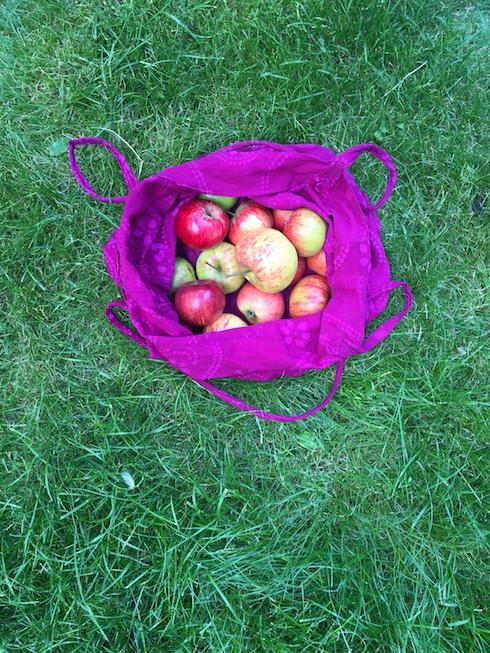 AppleHarvest3.jpg